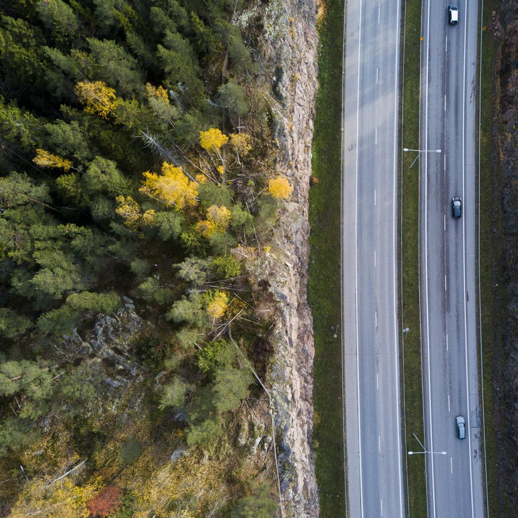 Half highway, half a forest